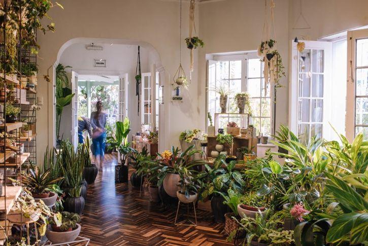 Plantique - Plantas y accesorios decorativos en Miraflores, Lima 1