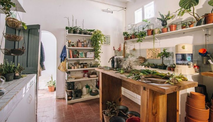 Plantique - Plantas y accesorios decorativos en Miraflores, Lima 2