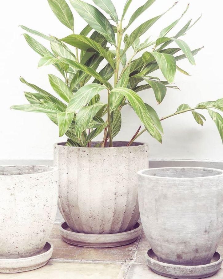 Plantique - Plantas y accesorios decorativos en Miraflores, Lima 4