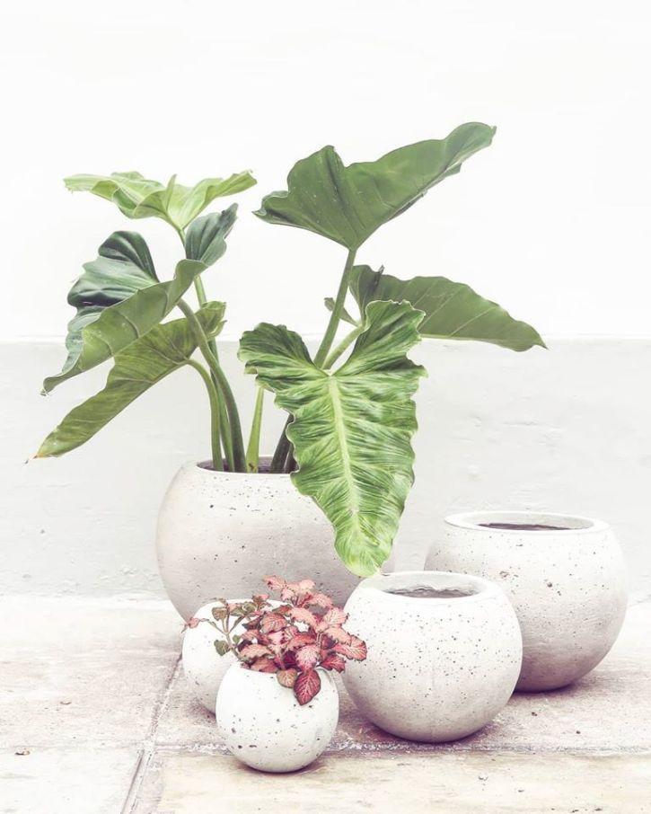 Plantique - Plantas y accesorios decorativos en Miraflores, Lima 5