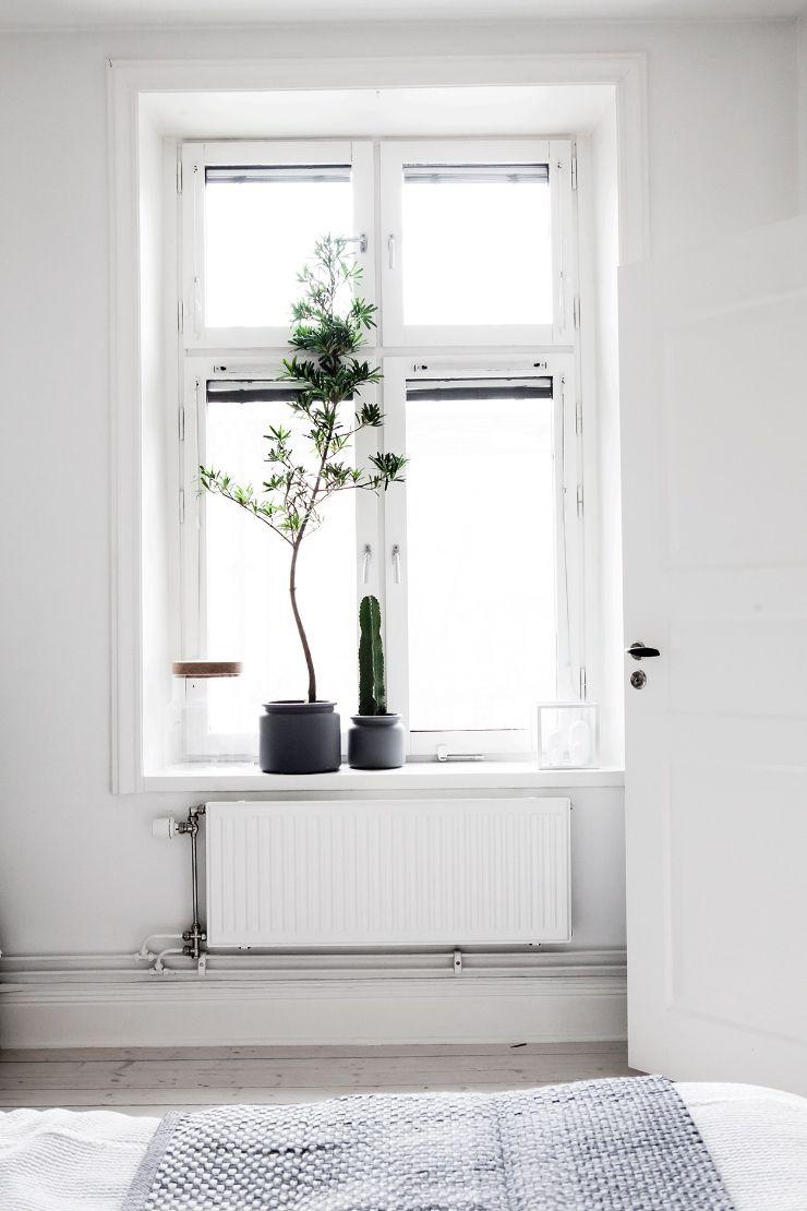 Plantas en macetas para sumar colores a la decoración y dar mayor privacidad